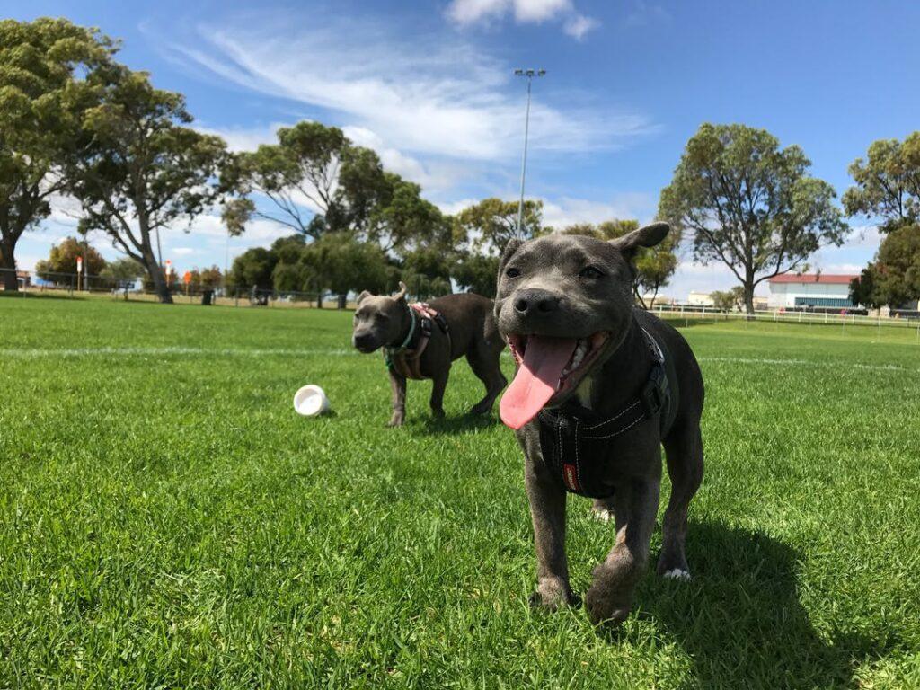 A new dog park for Essendon West