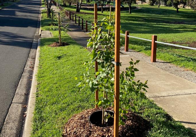 Website dimensions Tree Planting